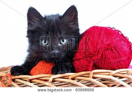 Black kitten playing with a red ball of yarn isolated on a white background poster