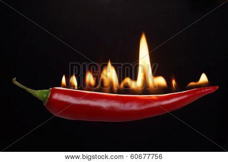 Fiery hot pepper.