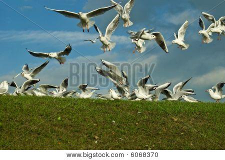 Scavaging Birds