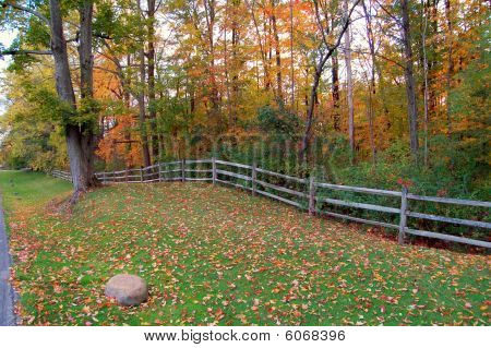 AUTUMN TREES AND A CORRAL FENCE