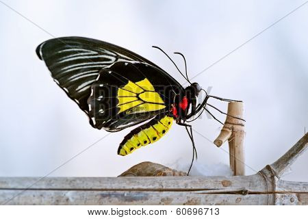 Butterfly On A Nesting Branch