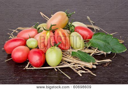 Tomatoes Style - Lycopersicon Exculentum Mill