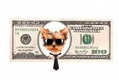 Artistic dollar bill with dog president background poster