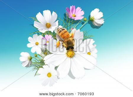 Camomile And A Bee