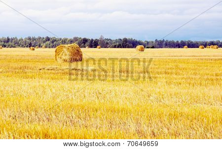 Field With Straw Sheaves After A Crop Harvest
