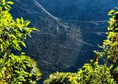 Golden orb weaver spider on its web in Nepal poster