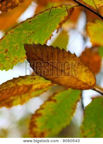 Beautiful Colored Leaves