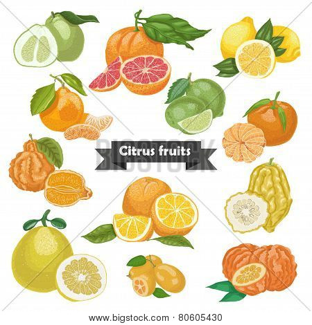 Set Of Isolated Citrus Fruits