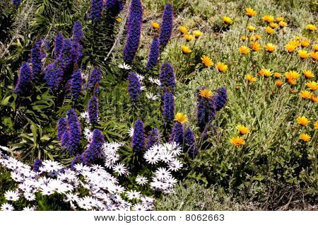 Monterey Wildflowers
