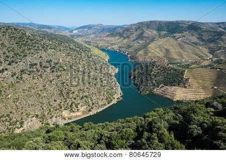 Douro Vineyards By The River