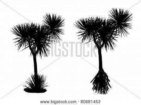 Pandanus Tree Silhouette