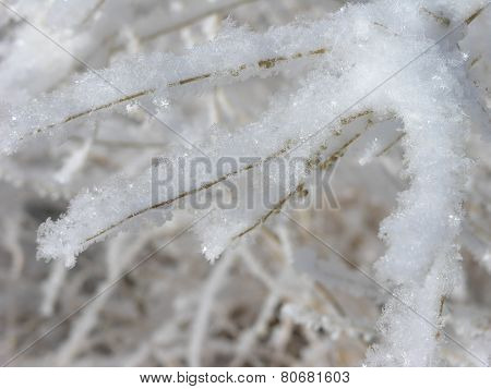 Tree branch covered in winter ice crystals