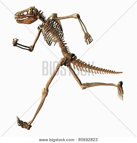 Chimeric Skeleton