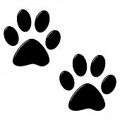 3d cat foot prints isolated in white poster