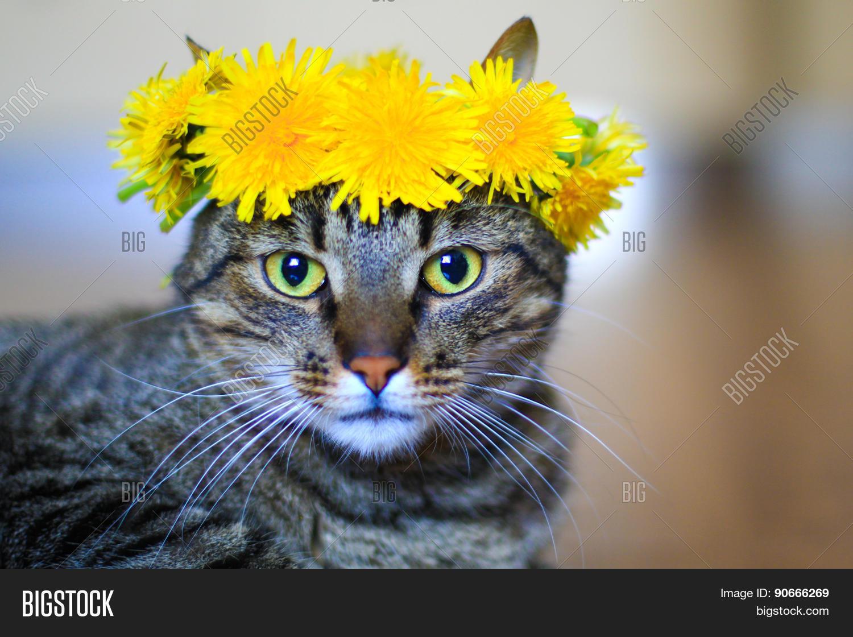 Cat Flower Crown Image Photo Free Trial Bigstock