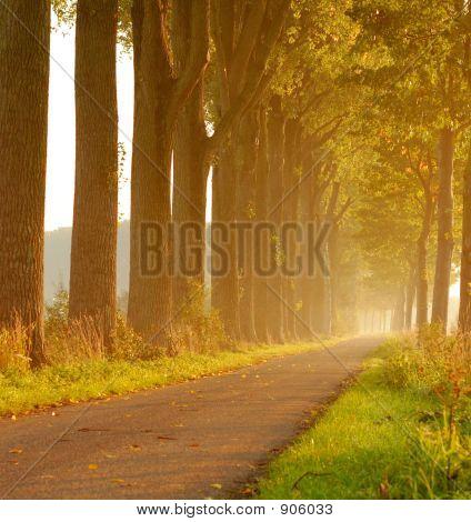 Poplar Lane