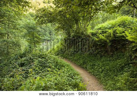 Of path in forest Arhavi, Artvin, Turkey