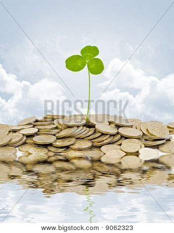 plant and a lot of golden coins over blue sky and clouds