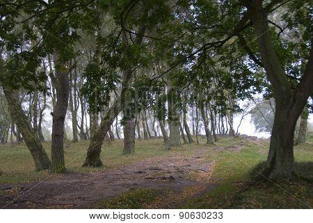 Stanton Moor, Derbyshire, UK