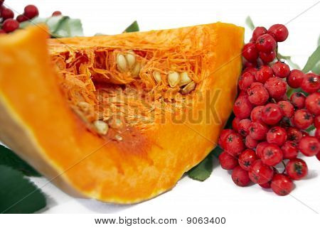 Pumpkin With The Branch Of Wild Ash