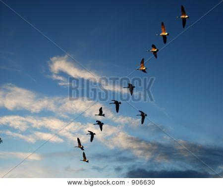 Flying Ducks4