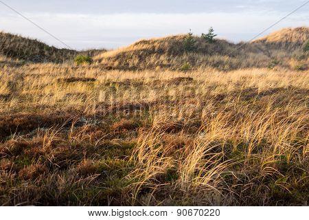 Dune Landscape In Skagen, Denmark