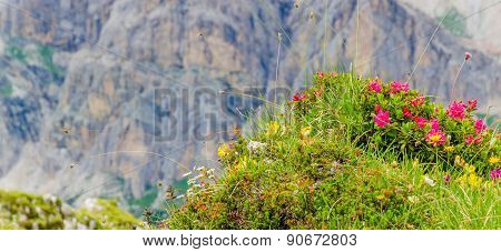 Flowers and mountain pine, Italy
