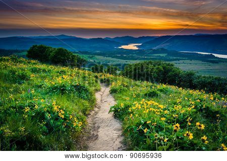 Wildflowers Along A Trail And View Of The Columbia River At Sunset, At Tom Mccall Nature Preserve, C