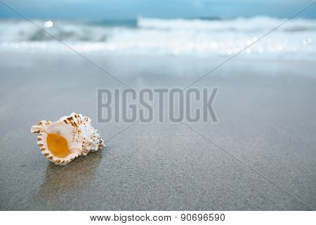 sea shell with sea wave,  Florida beach  under the sun light, live action