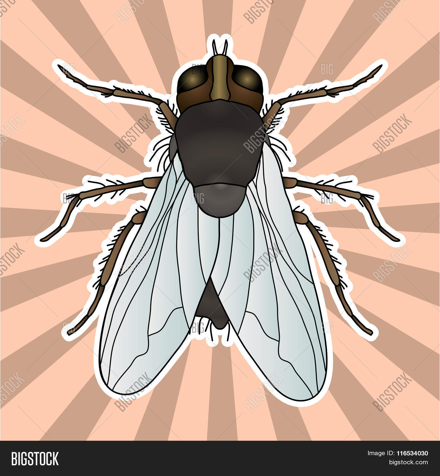 Insect Anatomy. Sticker Fly. Musca Vector & Photo | Bigstock