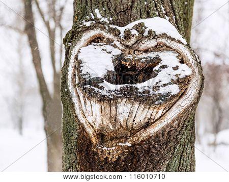 Heart Shape On Tree.heart On Snow Tree