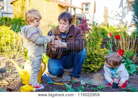 Two little boys and father planting seedlings in vegetable garde