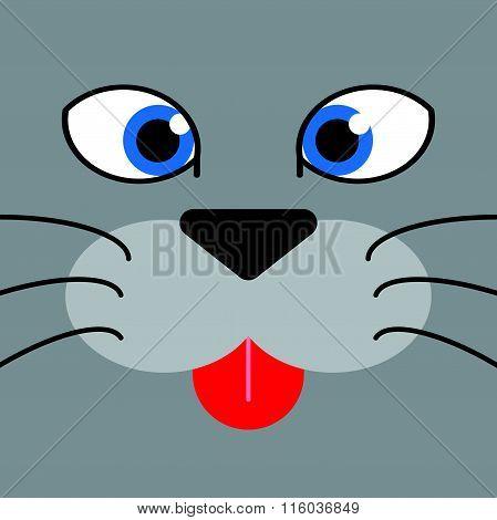 cutie cat's face