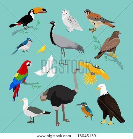 Collection of Various Birds Flat Design