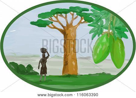Baobab Tree And Fruit Watercolor