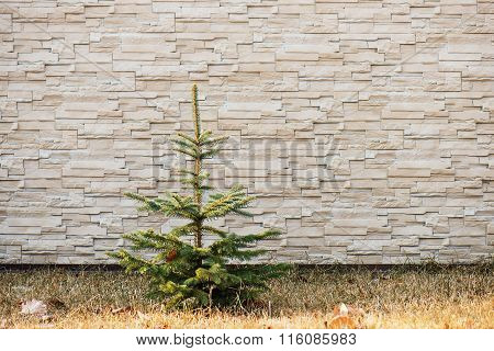 Small Fir Tree On Wall With Pattern.