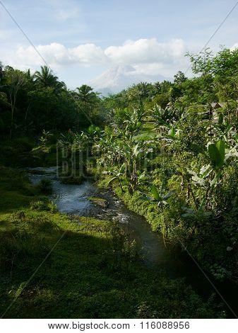 Mount Merapi and jungle on Java, Indonesia