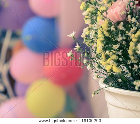 Chrysanthemum Ornamental In White Flowerpot