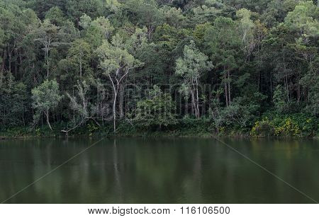 Beautiful View Of Pine Tree Reflection In A Lake