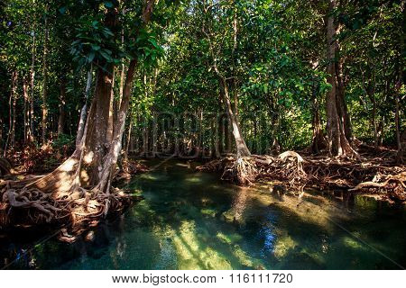 River Gleams Among Mangrove Trees Under Sunlight In Park