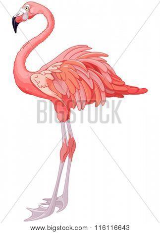 Illustration of rosy flamingo