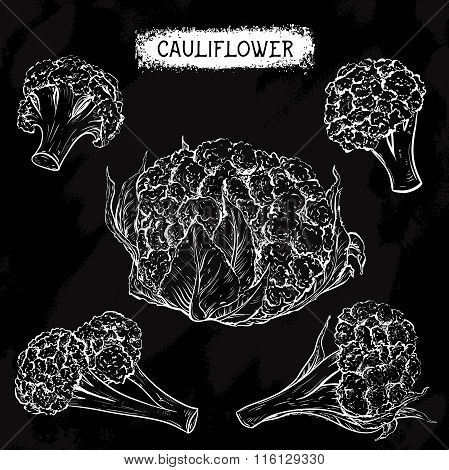 Cauliflower. Vintage collection of cauliflower in different angles on chalkboard. Isolated elements.