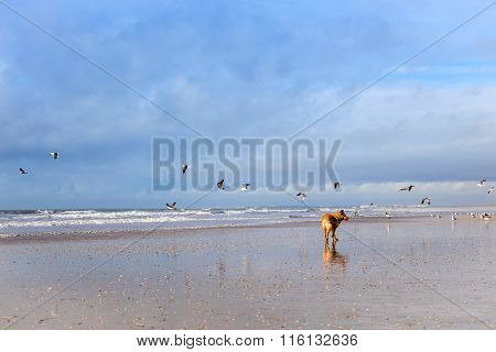 Dog on Seagulls hunting on the beach Punta Umbria Spain