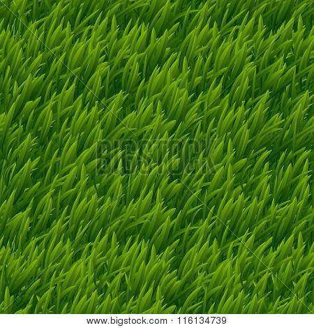 Green grass vector seamless texture