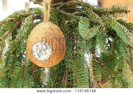 Closeup of filled Coconut Shell suet treats hanging at bird feeder decorated with pine tree branches