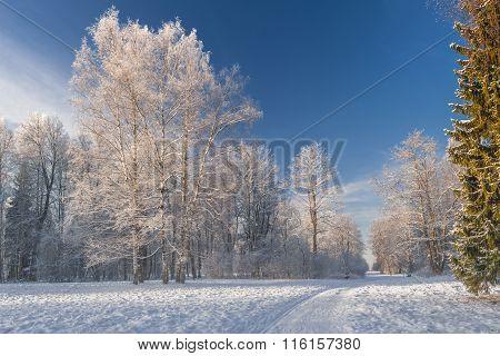 Way To Winter Park
