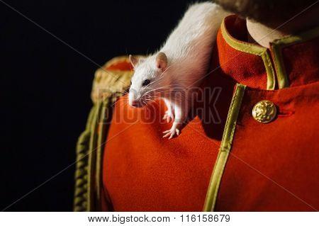 White lab rat on the shoulder