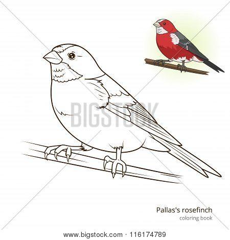Pallas rosefinch color book vector