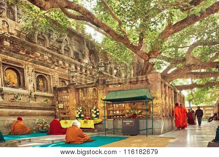 Many Prayers Sitting Around The Bodhi Tree, Which The Buddha Became Enlightened