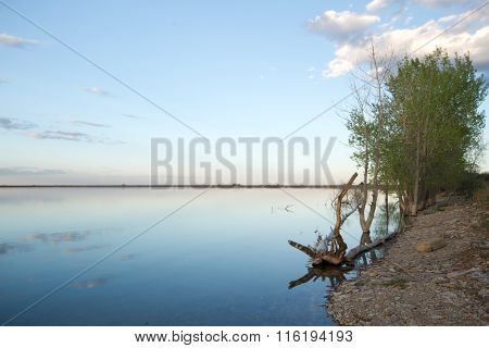 A Tree On The Lake Shoreline On A Cloudy Day
